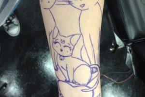 Erika comenzó con Artemis, Diana y Luna, los gatos de la serie. Foto:WasHuZ/Imgur. Imagen Por:
