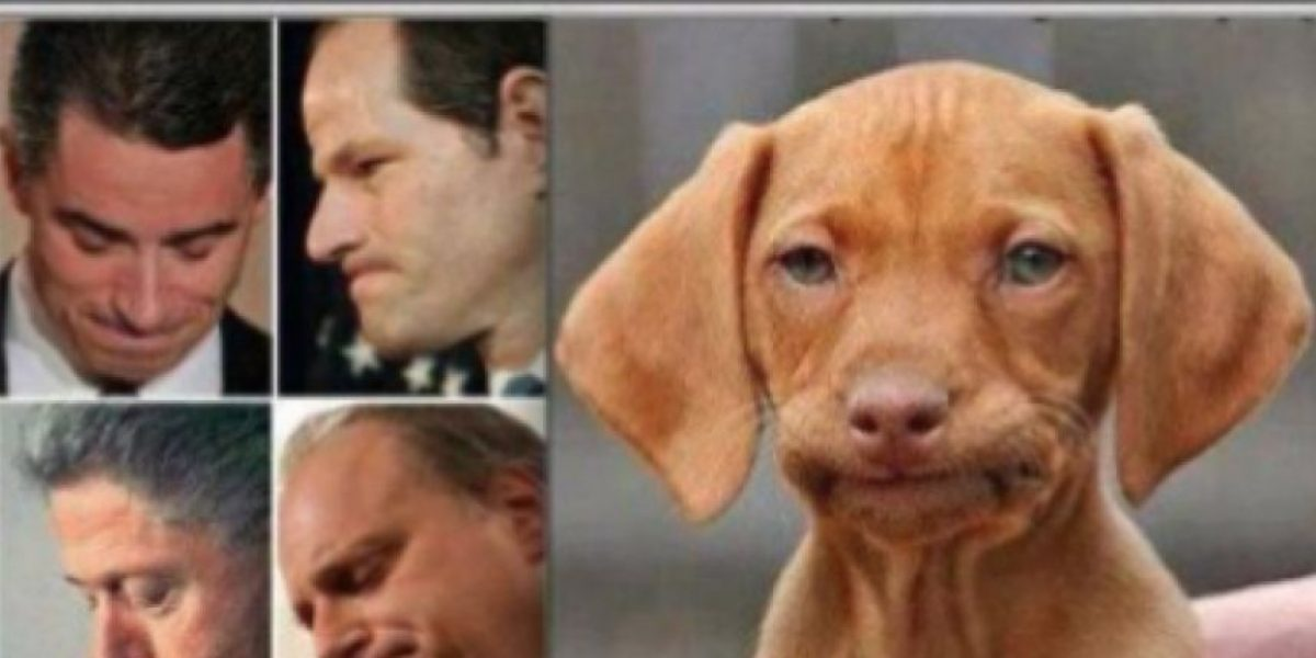 FOTOS: ¡Sorprendente! 52 gestos de humanos que podrían ver en animales
