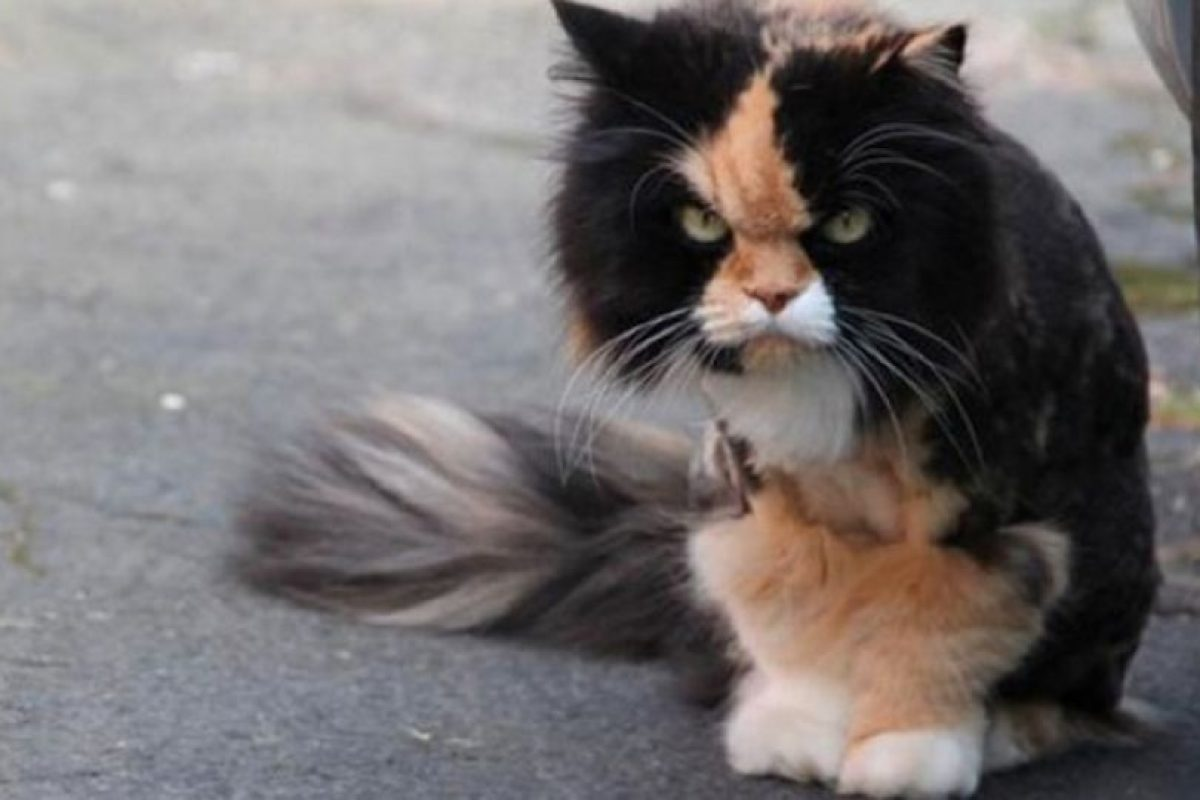 Un poquito enojado… Foto:Tumblr.com/tagged-funy-pets. Imagen Por: