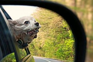 ¡Divertido! Foto:Dogguie.net. Imagen Por:
