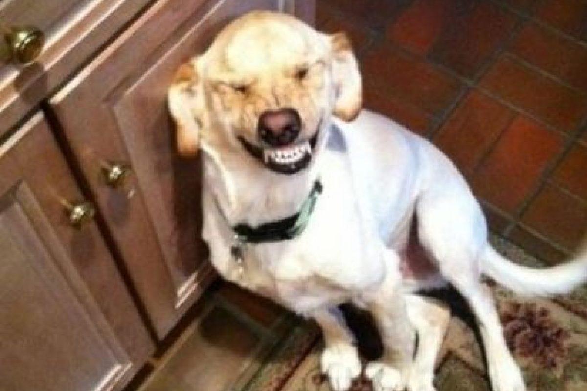 ¡Yo no hice nada! Foto:Know Your Meme. Imagen Por: