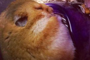Él prefiere dormir antes de sacar sus reservas Foto:Twitter. Imagen Por: