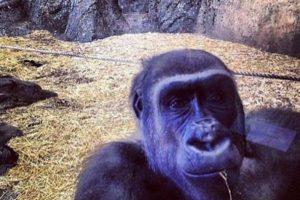 Saludos desde el zoo. Foto:HumorTrain. Imagen Por: