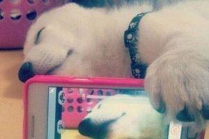 Dormido. Foto:Imgur. Imagen Por:
