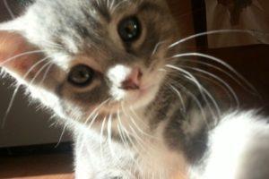 ¿Miau? Foto:Imgur. Imagen Por: