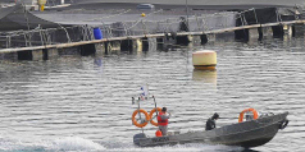 Salmonera noruega comienza importantes inversiones en Chile
