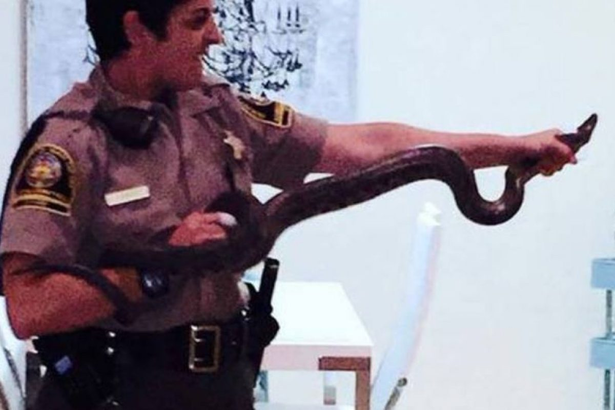 """Esta """"pequeña"""" boa fue encontrada por Foto:Twitter/Policía San Diego. Imagen Por:"""