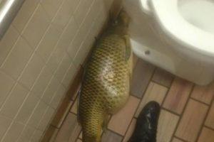 Este pescadote fue hallado en un restaurante famoso de comida rápida. Foto:Reddit. Imagen Por: