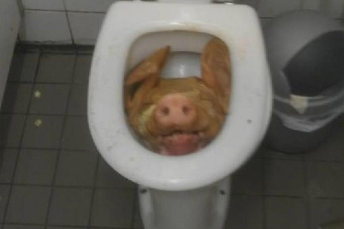 Esta cabeza de lechón fue hallada en un club de Amsterdam Foto:Pikdit. Imagen Por: