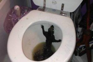 No es una rata, pero lo parece. Es una ardilla hallada en Winnipeg Foto:Twitter. Imagen Por: