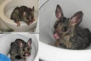Esta cosita fue hallada en Texas. Y tampoco es una rata. Foto:Oddee. Imagen Por: