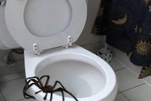 Esta puede causar lesiones si no tienen cuidado. Foto:Twitter. Imagen Por: