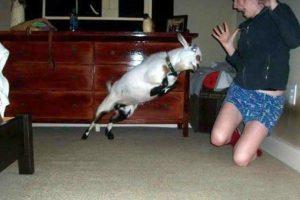 Salta. Foto:Funnypics. Imagen Por: