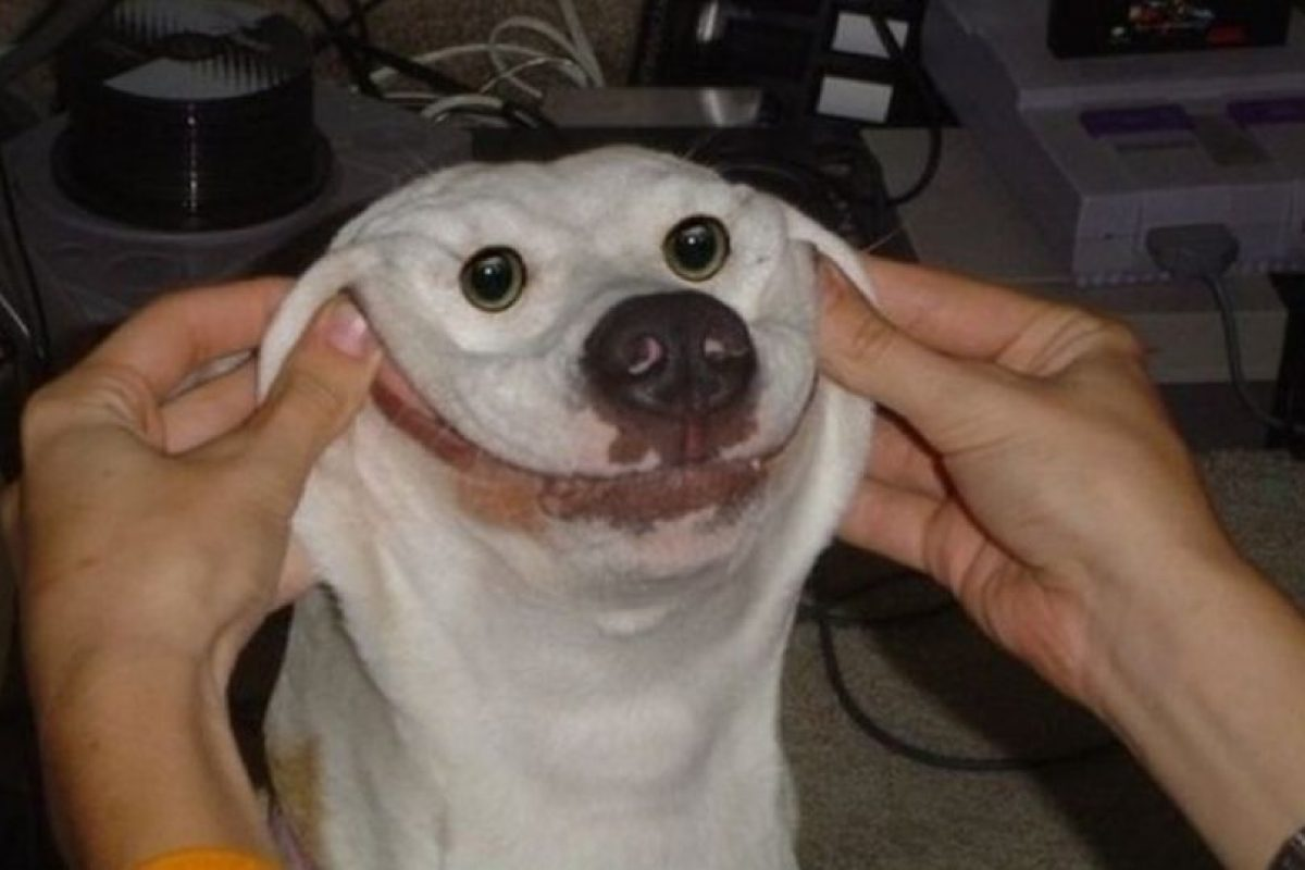 Foto:Tumblr.com/Tagged-mascotas-graciosas. Imagen Por: