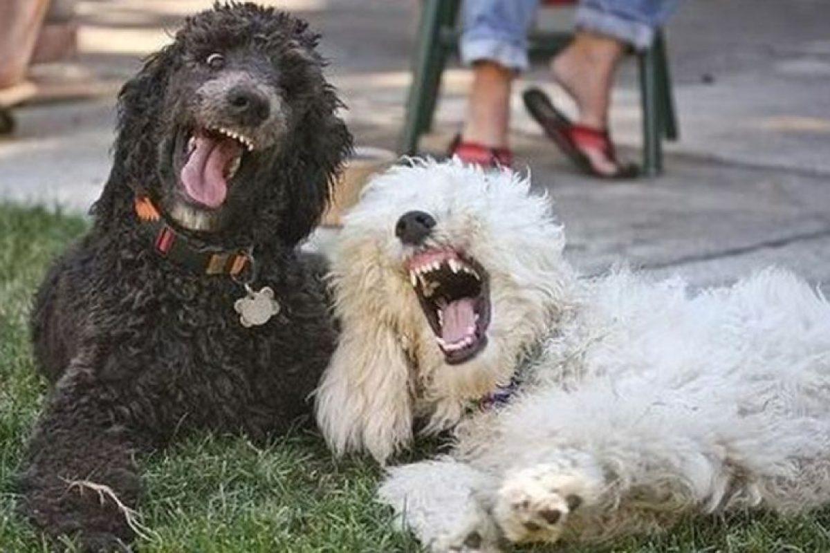 Las personas que tienen más apego a sus mascotas tienen niveles más altos de neuroticismo. Foto:Perros.facilisimo. Imagen Por: