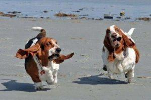 """Los dueños de mascotas también fueron calificados de acuerdo con el Anexo Lexington para Mascotas Escala, que mide afecto por los animales domésticos y un cuestionario adjunto que mide el """"apego ansioso"""" y el """"apego evitativo"""" Foto:Tumblr.com/Tagged-mascotas-graciosas. Imagen Por:"""