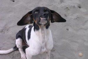 Foto:Dogguie. Imagen Por: