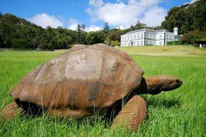 En 2014, Jonathan cumplió 182 años respirando en la Tierra. Se cree que puede ser el animal más viejo vivo en nuestro planeta. Foto:www.tripadvisor.com. Imagen Por: