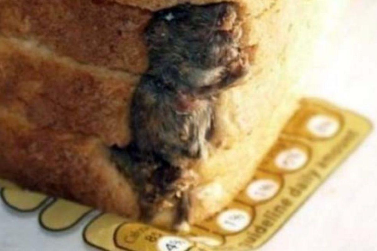Rata en un nugget. Foto:EpicFail. Imagen Por: