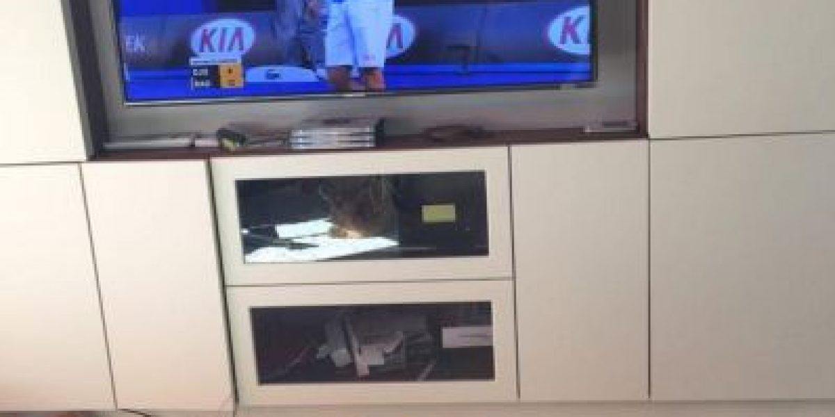 FOTOS: Este es el fan más tierno de Novak Djokovic, el mejor tenista del mundo