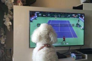 A la mascota de los Djokovic también le gusta el tenis. Foto:JelenaRisticNDF. Imagen Por: