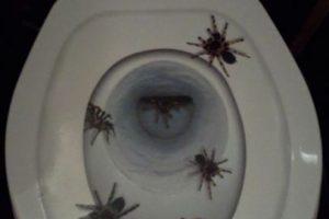 En su taza del baño. Foto:Imgur. Imagen Por: