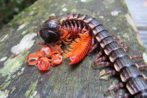 ¿Es justo ver a esto alimentándose de eso otro? Foto:Imgur. Imagen Por: