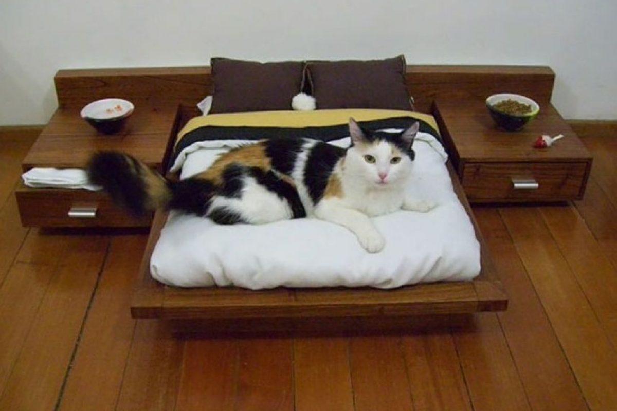 Una habitación para este gato Foto:Boredpanda. Imagen Por: