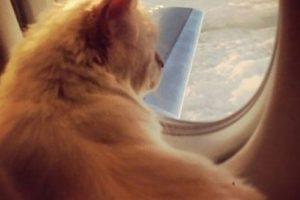 Al parecer está acostumbrado a viajar… Foto:Boredpanda. Imagen Por:
