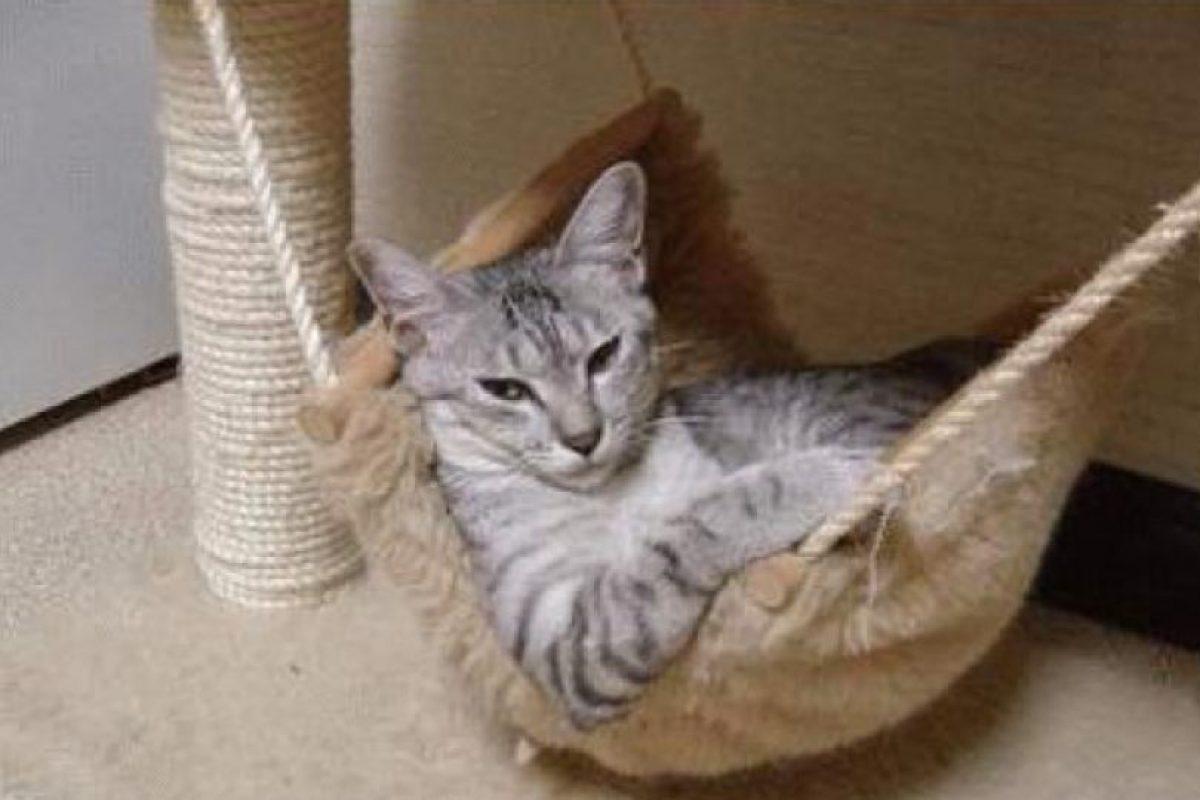 Se le ve cómodo Foto:Boredpanda. Imagen Por: