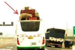 WTF! Foto:Tumblr.com/tagged/fail- transporte. Imagen Por: