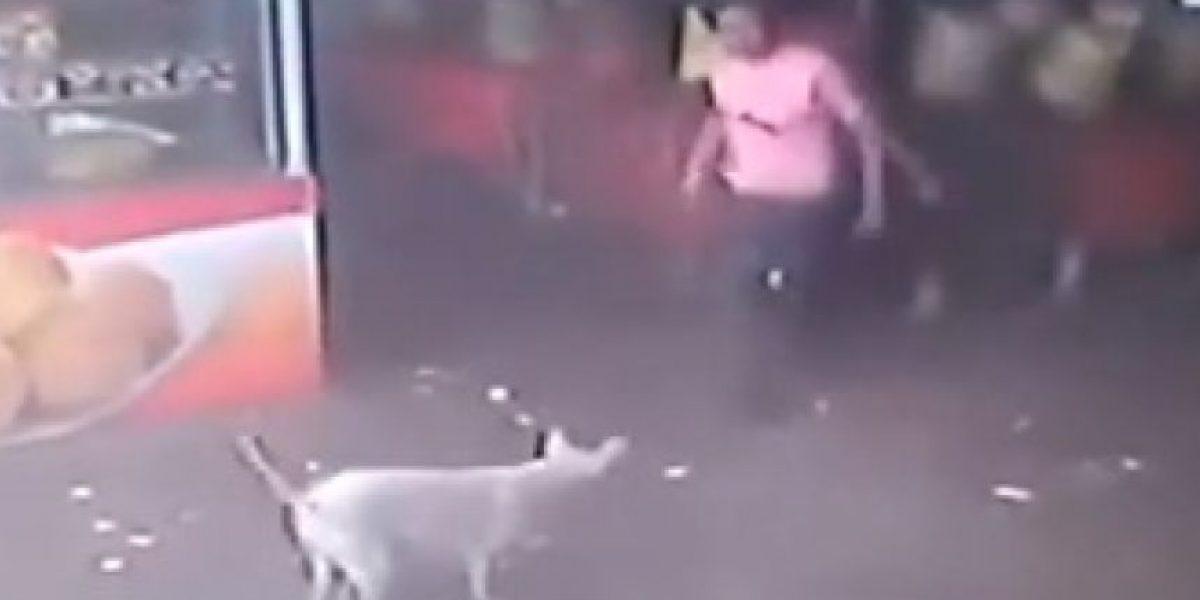 VIDEO: Por querer maltratar a este perrito recibió una lección inolvidable