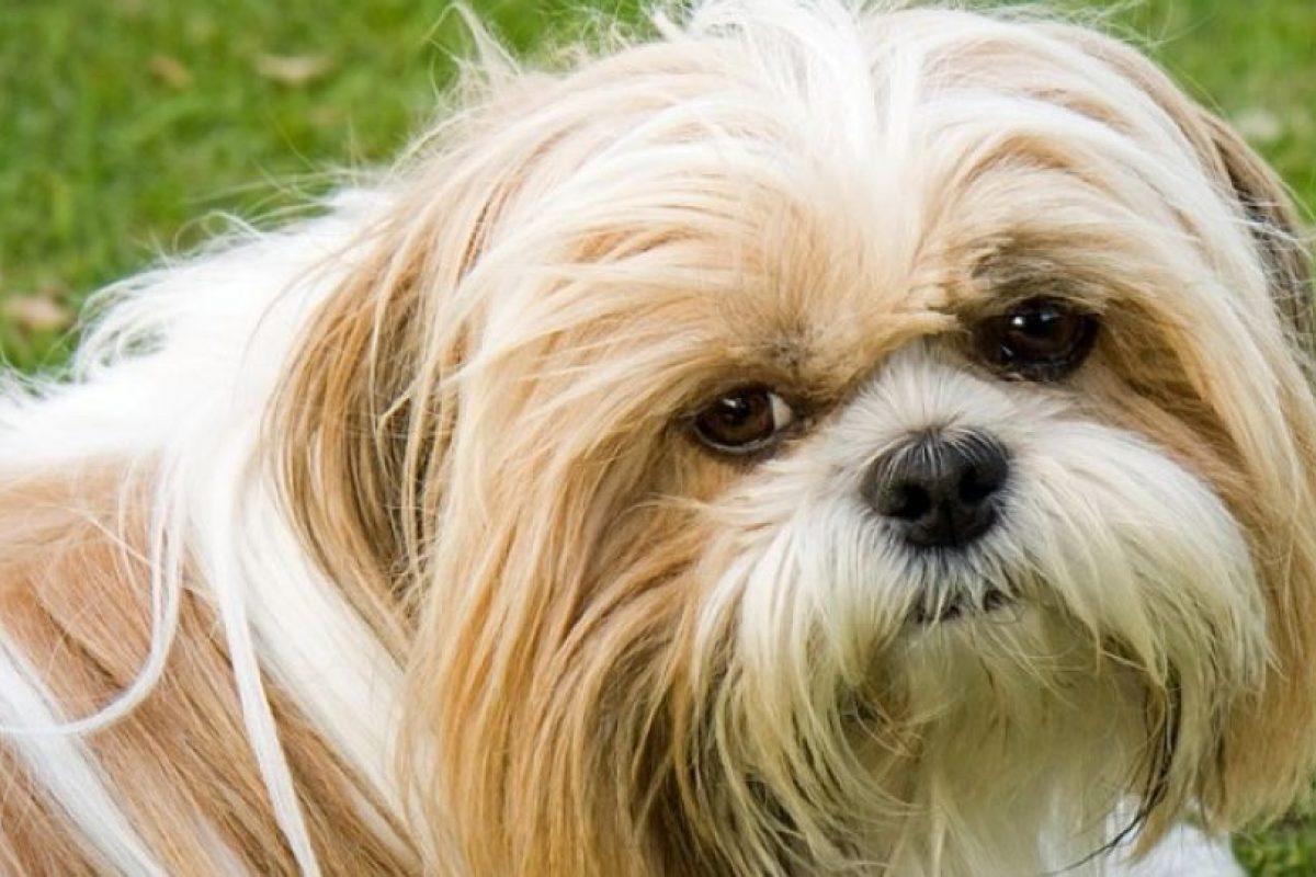 1. Caminar hacia un perro desconocido mirándolo a los ojos Foto:Pixabay. Imagen Por: