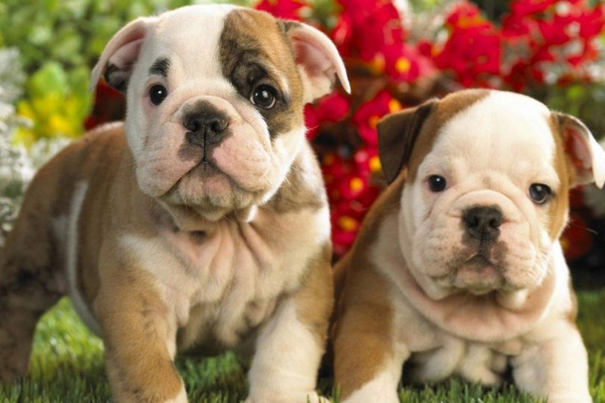 Cuando se presiona demasiado a los perros en estas situaciones sociales, es más probable que se desquiten con una mordida o pelea. Foto:Pixabay. Imagen Por: