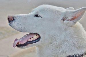 Cuando miras a un perro desconocido a los ojos, sin parpadear, aunque estés sonriendo y tratando de parecer cálido, el perro probablemente lo está viendo como un acto de dominancia o agresión. Foto:Pixabay. Imagen Por: