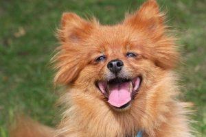 Cabe señalar que, al igual que en los seres humanos, una dieta saludable, la estimulación mental, el contacto humano y el ejercicio físico puede ayudar a prevenir el deterioro cognitivo en las mascotas. Foto:Pixabay. Imagen Por: