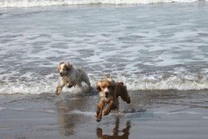 Y, por supuesto, sacar al perro a pasear cada día también puede ayudar a vivir una vida más larga y saludable. Foto:Tumblr.com/Tagged-perros. Imagen Por: