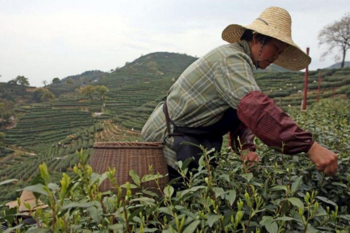7. Granjas donde se cultivan cadáveres Foto:Wikipedia. Imagen Por: