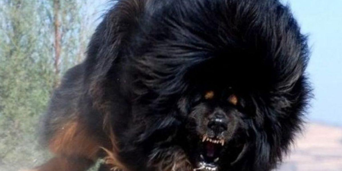 INFOGRAFÍA: Los perros más caros del mundo