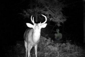 Bambi y su amigo. Foto:Tumblr. Imagen Por: