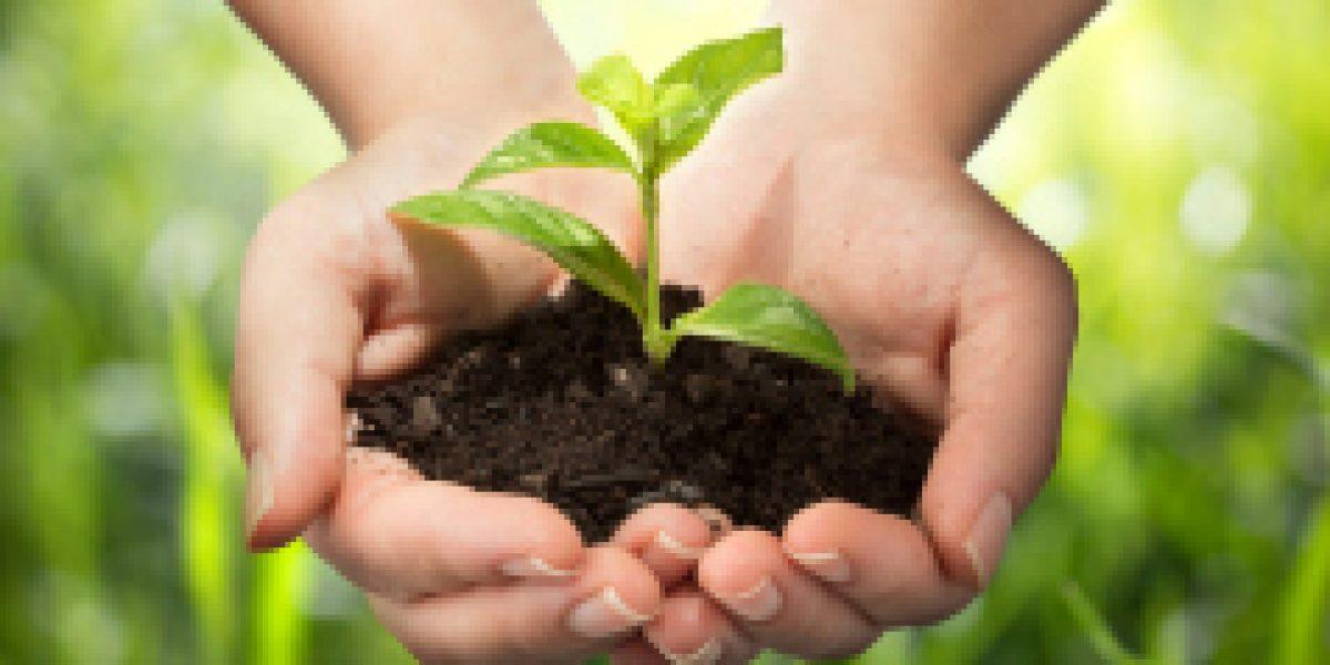Las plantas también enamoran este 14 de febrero