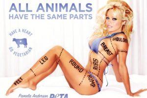 . Imagen Por: PETA.org
