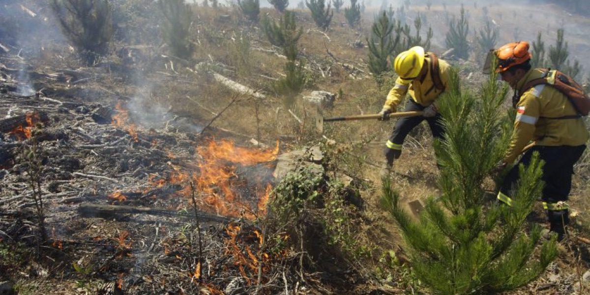 Onemi : 22 incendios forestales se encuentran activos entre la región de Valparaíso y Araucanía