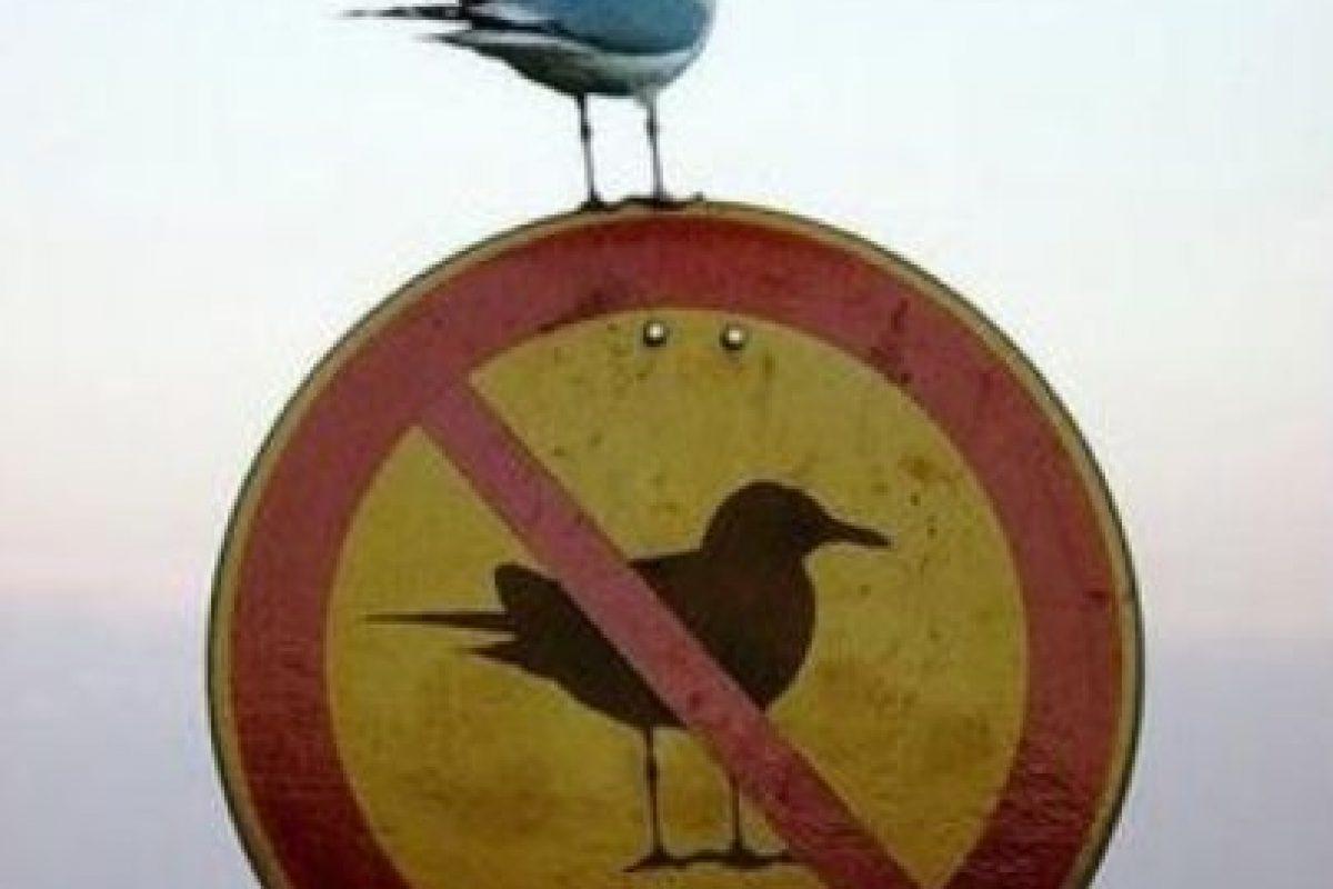 Hasta las aves rompen las reglas Foto:Know Your Meme. Imagen Por: