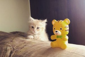 3. El gato debe tener una caja en la cual realizar sus necesidades Foto:Instagram angelina.korneeva. Imagen Por: