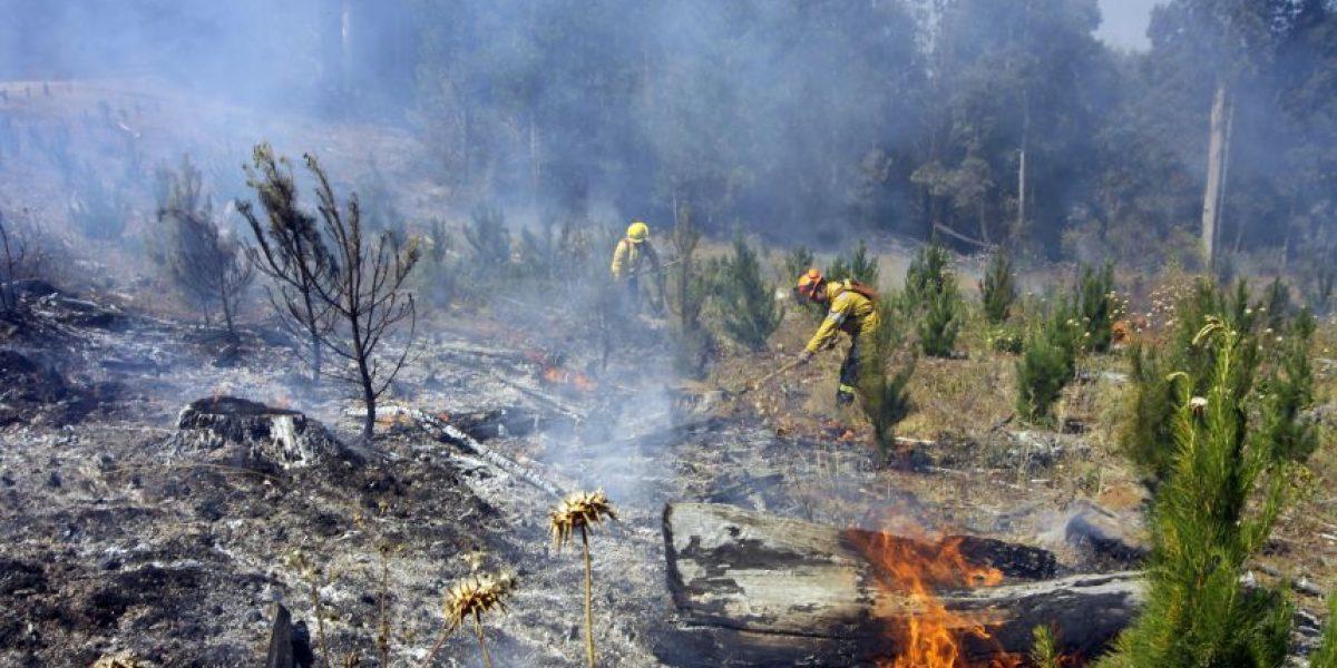 Balance por incendios forestales: 5 de los 14 focos son los más peligrosos