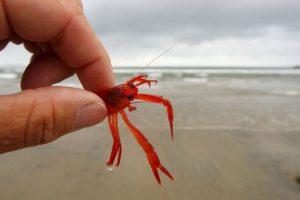 4. El hombre lleva 30 años como pescador. Foto:Getty. Imagen Por: