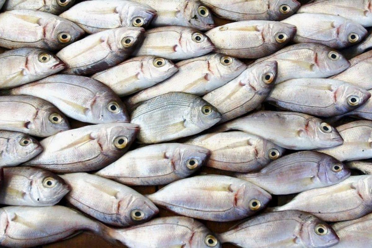 1. El pez tiene las dos bocas unidas. Foto:Getty. Imagen Por: