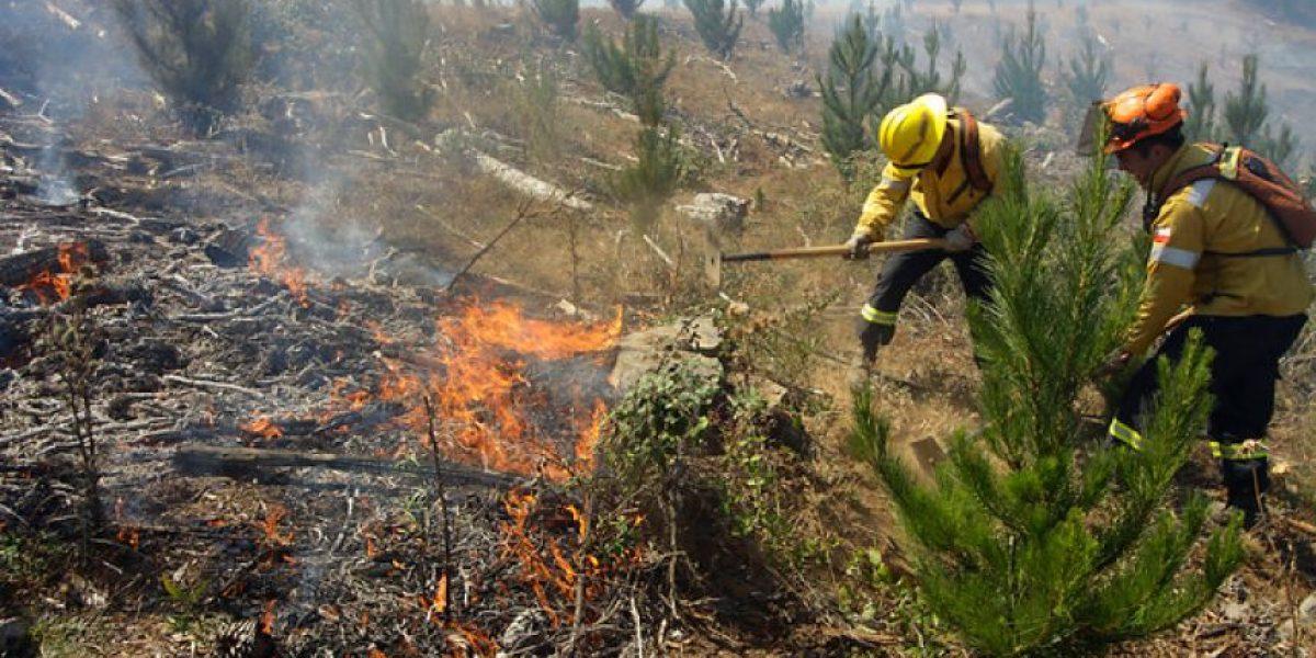 Se mantiene Alerta Roja en Región de Los Lagos por incendios forestales