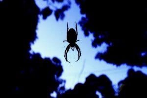 Pueden permanecer ocultas por horas para atrapar a su presa Foto:Getyy Images. Imagen Por: